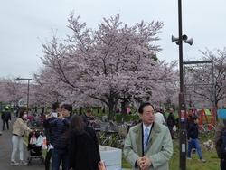 千本桜まつり.jpg
